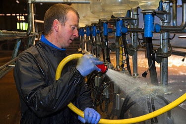 Dairy farmer cleaning out milking parlour with hose after milking, England, november  -  Wayne Hutchinson/ FLPA