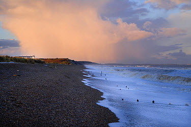 View of incoming tide over shingle beach, with stormclouds over old Coastguard's cottages of Dunwich Heath in background, Minsmere RSPB reserve, Suffolk, England, november  -  Andrew Bailey/ FLPA