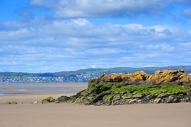 View of coast with rocky outcrop at low tide, looking towards Grange-over-sands, Silverdale, Morecambe Bay, Lancashire, England, april  -  John Eveson/ FLPA