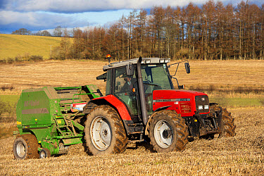 Massey Fergusson tractor with McHale round baler, baling straw in stubble field, Scotland, february  -  Wayne Hutchinson/ FLPA