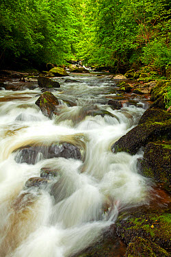 View of fast-flowing river, East Lyn River, East Lyn Valley, Lynmouth, North Devon, England, May  -  Andrew Wheatley/ FLPA