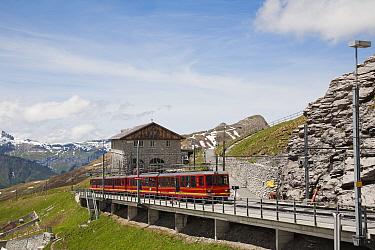 Jungfraubahn train at Eigergletscher Station, Bernese Alps, Switzerland, June  -  Dickie Duckett/ FLPA