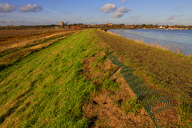 Plastic matting used to stop soil erosion on the sea wall, looking towards Orford, Suffolk  -  David Hosking/ FLPA