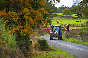 Mechanised hedge cutting, tractor with flail cutting hedgerow beside road, Tattenhall, Cheshire, England, November  -  John Eveson/ FLPA