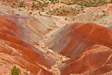 View of colourful 'badlands' habitat, Burr Road, Grand Staircase-Escalante National Monument, Utah, U.S.A., October  -  Bob Gibbons/ FLPA