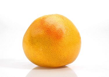 Grapefruit (Citrus x paradisi) fruit  -  Gerard Lacz/ FLPA