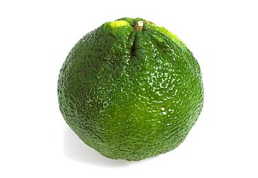 Ugli Fruit (Citrus reticulata x paradisi) fruit  -  Gerard Lacz/ FLPA