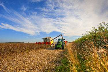 Spring Bean, 'Fuego' crop, Claas combine harvester loading John Deere tractor and trailer from auger, Norfolk, England, September  -  Mike Powles/ FLPA