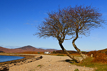View of coastline and remote cottage, Inver Cottage, only inhabited house on west coast north from Feolin, Whitefarland Bay, Inver Estate, Isle of Jura, Inner Hebrides, Scotland  -  Konrad Borkowski/ FLPA