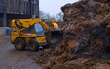 JCB Robot Skid Steer loader moving manure in farmyard, Nantwich, Cheshire, England, February  -  John Eveson/ FLPA