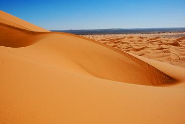 View of desert sand dunes, Grande Dune, Erg Chebbi, Sahara Desert, Morocco, February  -  Derek Hall/ FLPA