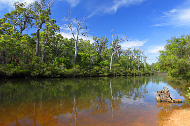 View of inland river section with trees reflected in water, Margaret River, Western Australia, Australia, February  -  John Watkins/ FLPA