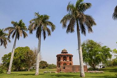 View of palm trees and red sandstone octagonal tower, Sher Mandal, Purana Qila, Delhi, India, March  -  Bernd Rohrschneider/ FLPA