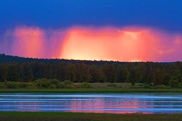 View of rainclouds over forest and lake habitat at sunset, Muonio, Lapland, Finland, September  -  Robert Canis/ FLPA