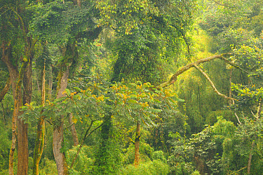 View of tropical forest habitat, Kahuzi-Biega National Park, Kivu Region, Democratic Republic of Congo, November  -  Fabio Pupin/ FLPA