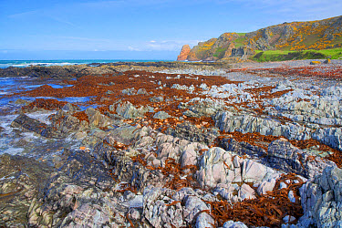 Rocky shore and cliffs at low tide, La Pulec, Jersey, Channel Islands, May  -  Bill Coster/ FLPA