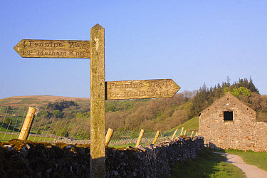 Pennine Way' signpost along public footpath, beside drystone wall and stone barn, Malham, Malhamdale, Yorkshire Dales National Park, North Yorkshire, England, May  -  Paul Miguel/ FLPA
