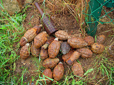 Iron Harvest', World War One unexploded grenades, recently recovered from fields, Somme Battlefield, Somme, Picardy, France, May  -  David Warren/ FLPA