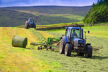 Tractors rowing and baling haylage in field, Chipping, Forest of Bowland, Lancashire, England, June  -  John Eveson/ FLPA
