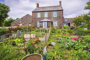 Vegetable garden and farmhouse, Millom, Cumbria, England, July  -  John Eveson/ FLPA
