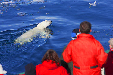 Polar Bear (Ursus maritimus) adult, swimming in open water, watched by tourists from boat, Davis Strait, Labrador Sea, North Atlantic Ocean, August  -  Martin Hale/ FLPA