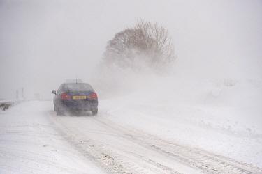 Car travelling along rural road during severe snowstorm, A, near Ravenstonedale, Cumbria, England, March  -  Wayne Hutchinson/ FLPA