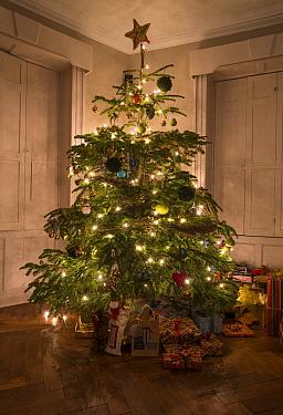 Decorated Christmas Tree, Chipping, Lancashire, England, December  -  John Eveson/ FLPA
