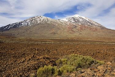 View of volcanic landscape of dormant volcano, Mount Teide, Mount Teide National Park, Tenerife, Canary Islands, February  -  Angela Hampton/ FLPA