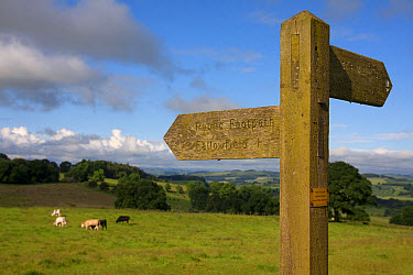 Public footpath sign at edge of pasture with cattle, looking towards Hexham from Planetrees, Hadrian's Wall, Northumberland, England, July  -  Angela Hampton/ FLPA