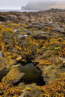 Rockpool habitat at low tide, Prawle Point, South Devon, England, September  -  Bob Gibbons/ FLPA