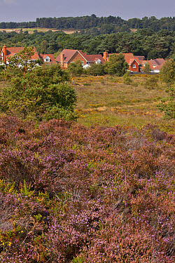 Housing development along edge of internationally important heathland habitat, Dunyeats Hill Nature Reserve, Poole Basin, Dorset, England, August  -  Bob Gibbons/ FLPA