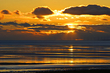 View across bay with offshore windfarm in distance at sunset, Humphrey Head, Morecambe Bay, Cumbria, England, December  -  Dave Pressland/ FLPA