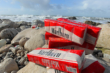 Cigarettes washed up on beach after container spill, Isle of Portland, Dorset, England, February  -  Steve Trewhella/ FLPA