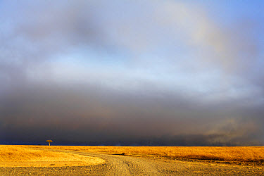 View of grassland habitat with stormclouds, Ol Pejeta Conservancy, Laikipia District, Kenya, February  -  Ben Sadd/ FLPA