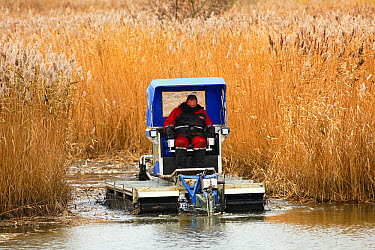 Habitat management for conservation, worker cutting channels in reedbed, improving water flow to increase biodiversity, Minsmere RSPB Reserve, Suffolk, England, December  -  Andrew Forsyth/ FLPA