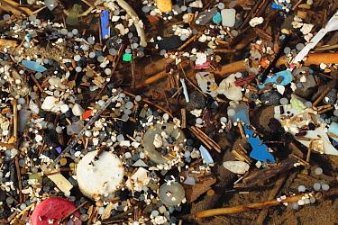 Micro plastics in pool, tiny nurdles and plastic debris in rockpool, Gower Peninsula, West Glamorgan, Wales, March  -  Steve Trewhella/ FLPA