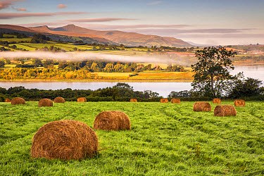 View of farmland with hay bales in meadow at sunrise, Llangorse Lake, Brecon Beacons National Park, Powys, Wales, September  -  Allen Lloyd/ FLPA