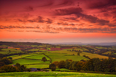 View of farmland with sheep flock grazing in pasture at sunrise, with Sugarloaf and Abergavenny in distance, Cobblers Plain, Monmouthshire, Wales, October  -  Allen Lloyd/ FLPA