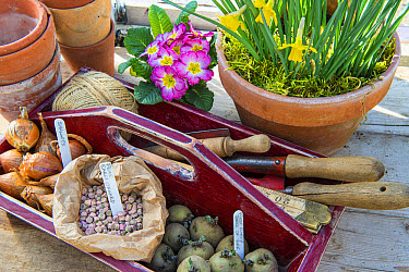 Wooden trug with vegetable seeds and garden tools, Norfolk, England, March  -  Gary K Smith/ FLPA