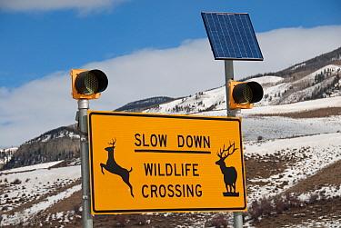 Slow Down, Wildlife Crossing' warning sign with solar powered lights, near Walden, North Park, Jackson County, Colorado, U.S.A., February  -  Chris & Tilde Stuart/ FLPA