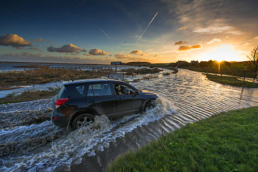 x driving through flooded coast road beside coastal marshland after tidal surge, Cley Marshes Reserve, Cley-next-the-sea, North Norfolk, England, December  -  Mike Powles/ FLPA