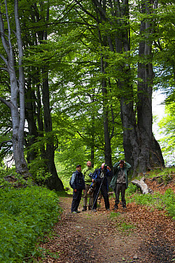 Bird watchers in Common Beech forest at Bogdan National Park Bulgaria  -  David Hosking/ FLPA