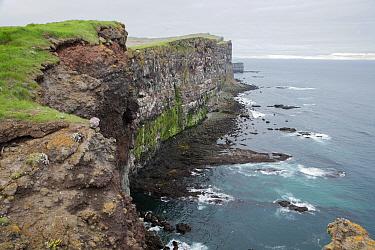 View of seabird nesting cliffs, Latrabjarg, Iceland, June  -  Bill Coster/ FLPA