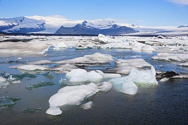 View of glacial icebergs in lake, Jokulsarlon Lagoon, Iceland, June  -  Bill Coster/ FLPA
