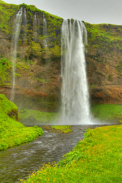 View of river and waterfall, Seljalandsfoss Waterfall, Seljalandsa River, Iceland, June  -  Bill Coster/ FLPA