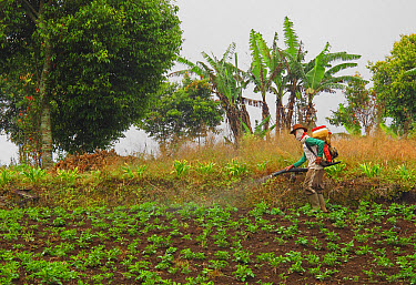 Farmer crop spraying in field just outside park entrance, Kerinci Seblat National Park, Sumatra, Greater Sunda Islands, Indonesia, June  -  Neil Bowman/ FLPA