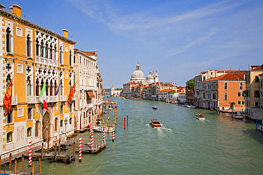 View of canal and Roman Catholic church, looking from Accademia Bridge at San Marco waterfront, Santa Maria della Salute, Grand Canal, Dorsoduro District, Venice, Veneto, Italy, May  -  Dickie Duckett/ FLPA