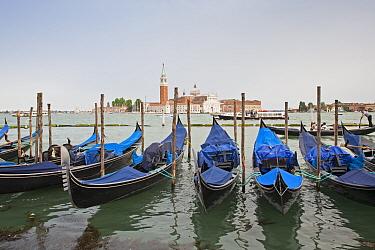 View of moored gondolas across waterway towards th century Benedictine church, Church of San Giorgio Maggiore, San Giorgio Maggiore, San Marco District, Venice, Veneto, Italy, May  -  Dickie Duckett/ FLPA