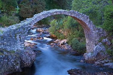 Old packhorse bridge over river at dusk, River Dulnain, Carrbridge, Badenoch and Strathspey, Highlands, Scotland, July  -  Bernd Rohrschneider/ FLPA
