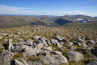 View of mountain summit, Cairn Gorm, Cairngorms National Park, Highlands, Scotland, July  -  Bernd Rohrschneider/ FLPA